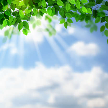 Summer fresh green leaves with sun rays on the sky