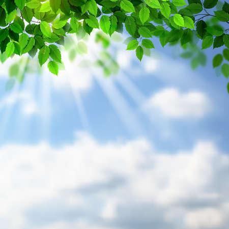 Zomer verse groene bladeren met zonnestralen op de hemel Stock Illustratie