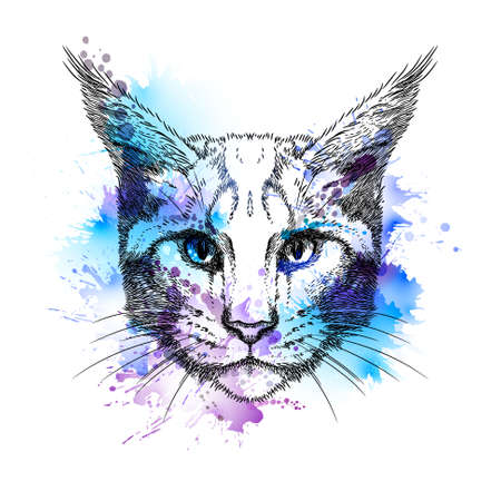 shrewd: Hand Drawn stylized portrait of cat face with blots