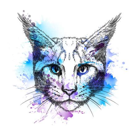 Hand gezeichnet stilisierte Porträt der Katze Gesicht mit Flecken Standard-Bild - 46966755