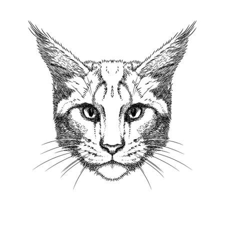 shrewd: Hand Drawn stylized portrait of cat face