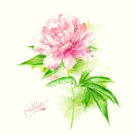 peony: The single flowering light pink peony with blots