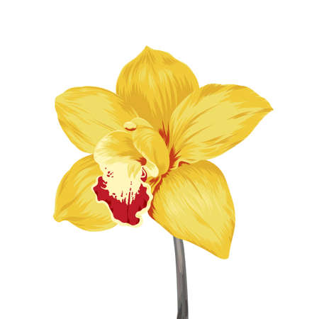 yellow stem: single yellow orchid flower isolated on white Illustration