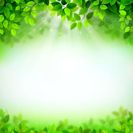 branches with fresh green leaves on the Seasons summer background with light sky