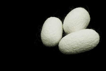transfigure: Silkworm cocoons on black background Stock Photo