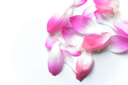 ピンク ロータスの花びらが白い背景で隔離
