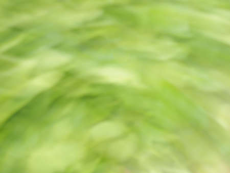 Natural abstract background from green plants