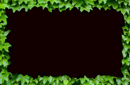 Green plant background decorated as a frame on black background