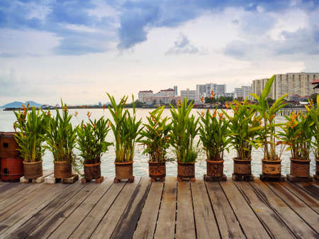 Canna Indica flowers in the clay pots decorating  along the wooden jetty in Penang, Malaysia