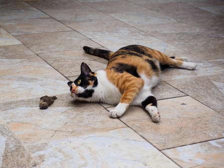 女性のべっ甲と床に横になっていると、それだけ鳥を見て白猫狩り 写真素材