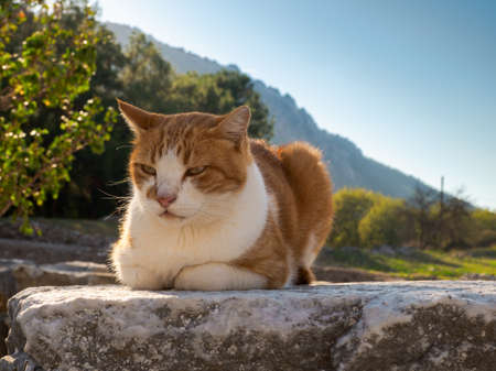 Cat crouching on the stone at Ephesus, the  ancient city, Selcuk town, Izmir Province, Turkey Imagens