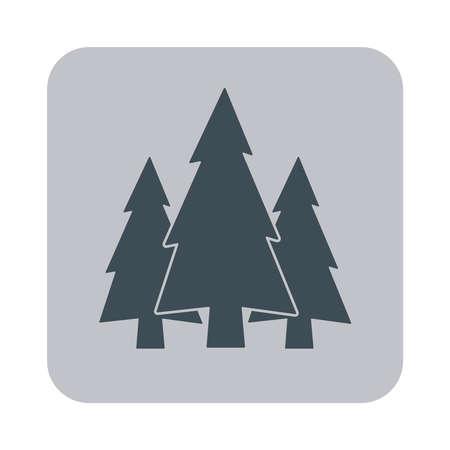 fir: flat icon Fir Trees