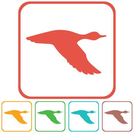 migrating: Vector silhouette flying duck. Vector illustration