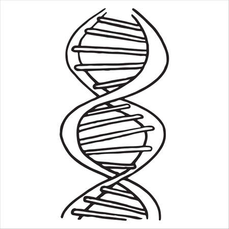 DNA spiral isolated on white background, vector illustration 일러스트