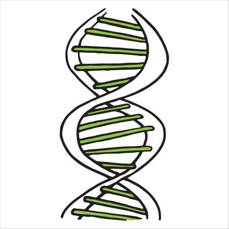 DNA spiral isolated on white background, vector illustration Vectores
