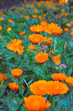 garden with orange flowers in spanish alcazar