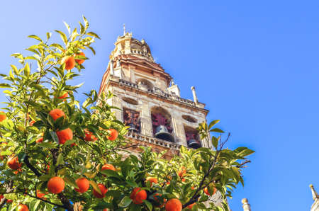An orange tree with the mosque tower from Cordoba Foto de archivo