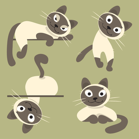 familiarity: Set of Siamese cats in different poses