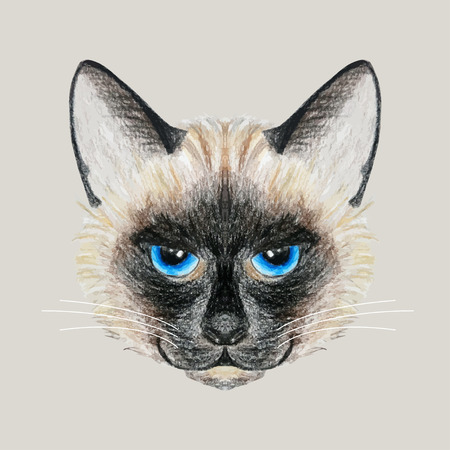 siamese cat: Beautiful vector Siamese cat with bright blue eyes