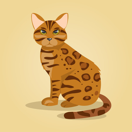 bengal: Illustration pedigree Bengal cat on a yellow background