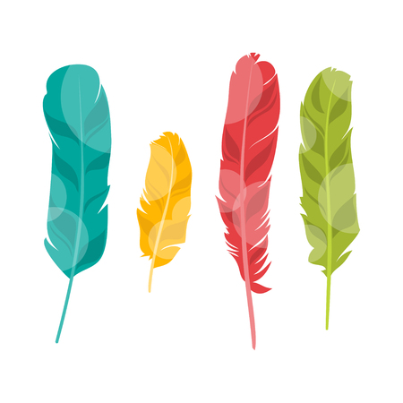 bird feathers: Illustration of four colorful feathers for your design