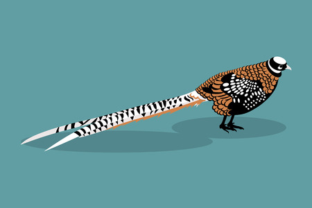 pheasant: Illustration royal pheasant on a blue background