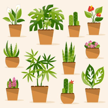indoor plants: A collection of indoor plants and flowers
