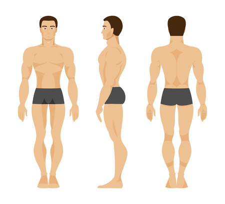 proportions of man: Anatomy of the male body in the front, rear and side Illustration