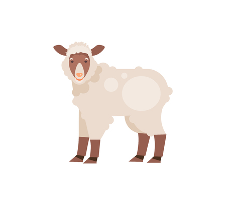 Cartoon sheep isolated on white background. Vector illustration 矢量图像
