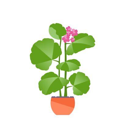 Houseplant geranium isolated on a white background. Vector flat illustration