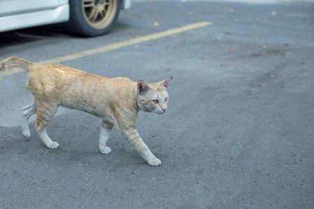 Cream Abandoned cat, focus selective.