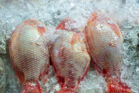 Tubtim fish is a fish that has been improved in the breed. 版權商用圖片