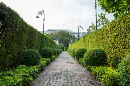 Empty walkway at the park around the Bangkok, feel fresh and relaxing time. Reklamní fotografie