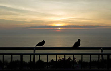 Two doves greeted the dawn at sea, a couple of pigeons, beautiful romantic love sea.