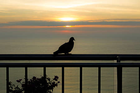 Dove greeted the dawn at sea, romantic morning at sunrise.