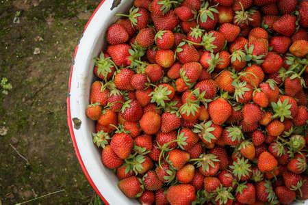 有機自然赤いイチゴ、コケむした汚れパスに Rusic エナメル鍋にストロベリー