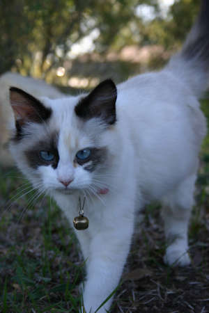 Strange Cat  Banque d'images - 262017