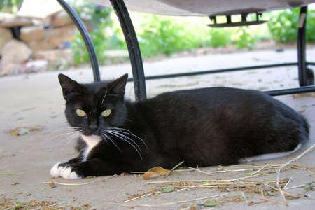 old cat Imagens