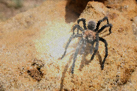 arachnoid: stained glass spider Stock Photo