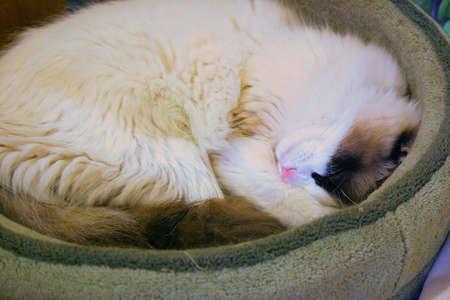 cat sleeps 版權商用圖片