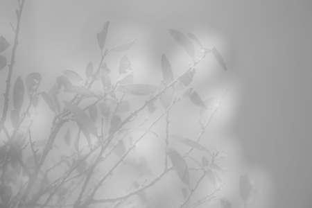 Ice Leaves