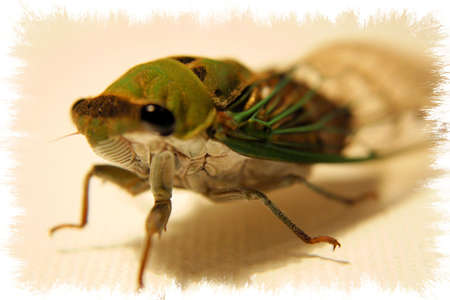 spoof: Bug Stock Photo