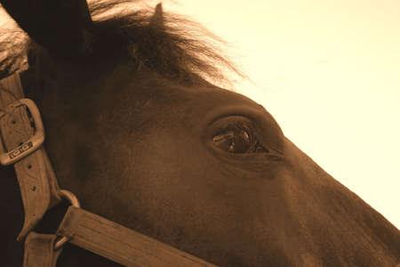Cara de caballo  Foto de archivo - 594724
