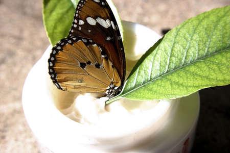 蝶美容クリームと植物