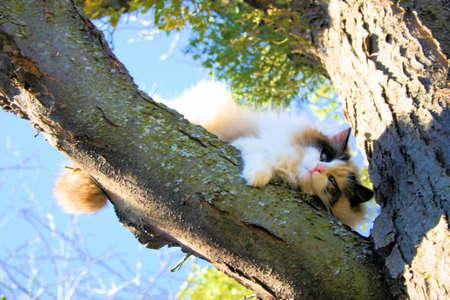 Stuck in un albero  Archivio Fotografico - 797314
