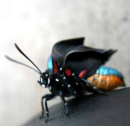 Unfolding Wings
