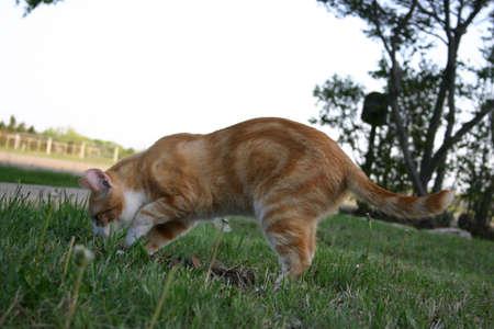 Cat Scratching Фото со стока