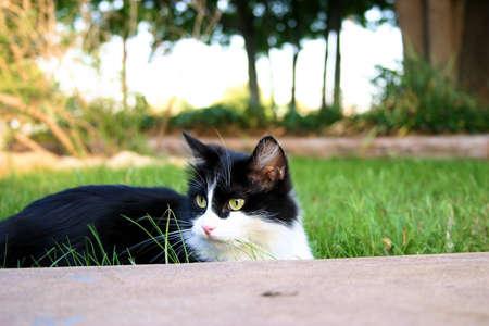 pondering: Pondering Cat