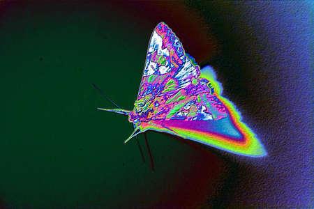 ghostly: evil moth
