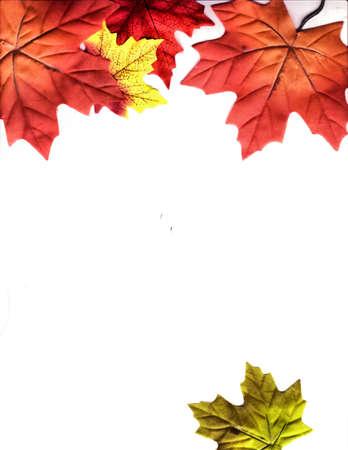 leaves falling photo